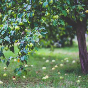 jardin fruitier