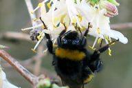 appel à projet biodiversité