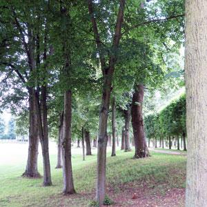 arbres de parcs historiques