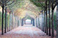 arbres de jardins historiques
