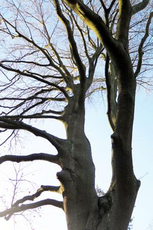 declaration des droits de l'arbre