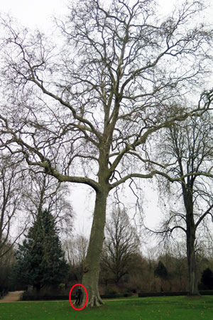 grands arbres