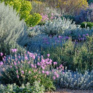 conception de jardins secs